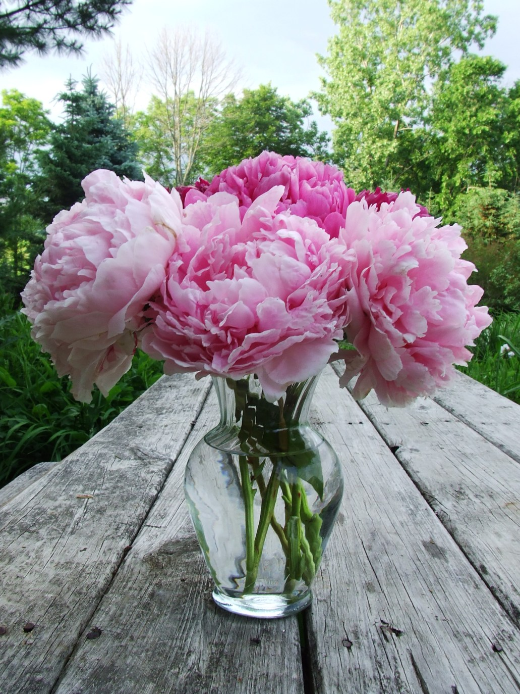 Light_Medium_PInk_Peonies_Vase